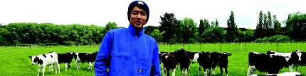 Sukses beternak sapi perah sembari kuliah
