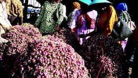 Sukses memperkuat bawang merah di pasar global