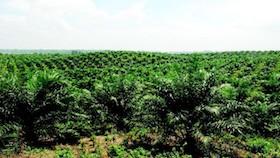 Utak-atik hutan untuk perkebunan
