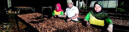 Upaya memperkuat produksi dan komunitas kakao