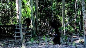 Wujudkan konservasi Otan, bukti sawit berkelanjutan