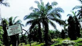 Replanting terganjal legalitas lahan