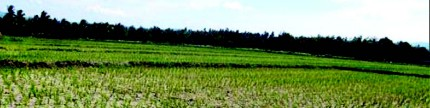 Kembalikan kesuburan tanah dengan asupan yang tepat