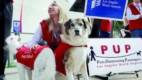 Terapi Hewan di Bandara