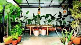 Bersantap di taman tropis