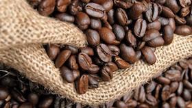 Kacang & biji-bijian mencegah penyakit degeneratif: kopi