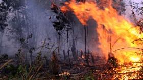 Perusahaan besar dalang kabut asap, masih berhutang ke negara
