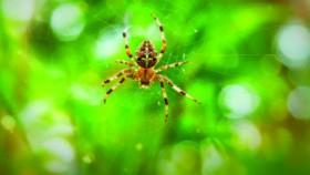 (Bukan) generasi laba-laba