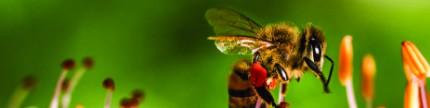 Lebah: Inspirasi kebaikan