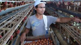 Pedagang 'bermain' di harga telur?