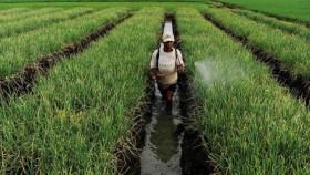 Agroekologi, solusi pertanian masa depan