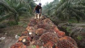 Manakala limbah sawit merambah pasar ekspor