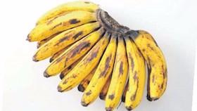 Seluk beluk pisang