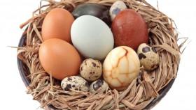 Ragam telur