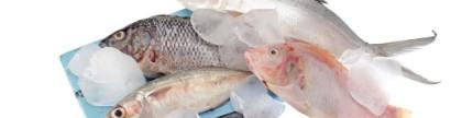 Berbagai ikan air tawar & payau
