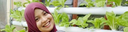 Dari hobi jadi pengusaha sayur organik