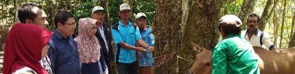 Diterjunkan tim untuk kendalikan penyakit jembrana di Lampung