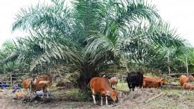 Jalan panjang negosiasi sawit Indonesia di uni Eropa