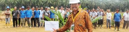 Percepatan replanting sawit tergantung kesiapan daerah