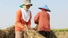 Cegah kehilangan hasil padi, petani 'wajib' tahu ini