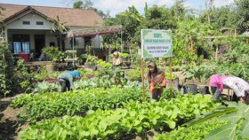 Swasembada pangan dari pekarangan