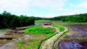 Program cetak sawah dorong peningkatan produksi padi
