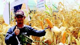 Pasar terbuka, petani B bergairah tanam jagung