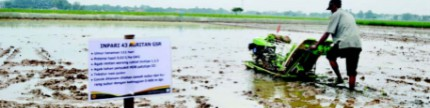 Korporasi petani padi, Karawang, jadi lokasi percontohan