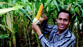 Petani nikmati panen jagung