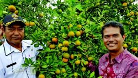 Meningkatkan daya saing jeruk melalui kelompok tani buah