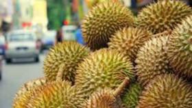 Perlawanan untuk durian Australia