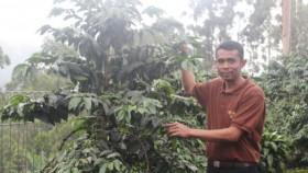 Gairah petani kopi bumi priangan