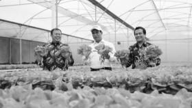 Ekspor sayuran di awal tahun