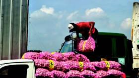 19 importir bawang putih terima rekomendasi impor