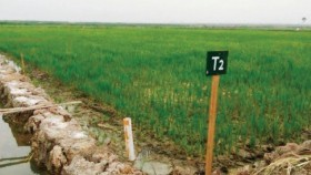 Petani lahan rawa dilatih Raisa dan Amator