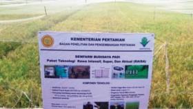 Kendalikan hama padi di lahan rawa dengan alami