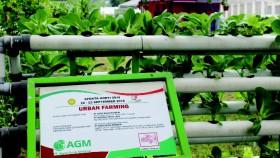 Menambah pendapatan dari pertanian keluarga