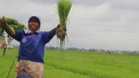 Wakaf pertanian kunci kedaulatan pangan