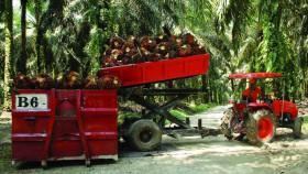 Sertifikasi sawit di Indonesia